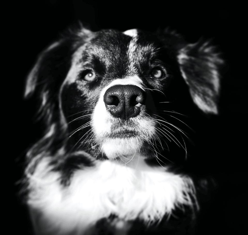 מלונה לכלבים